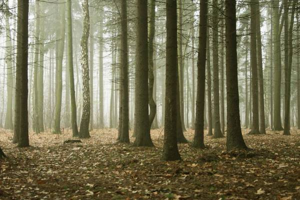 Wall Art - Photograph - Misty Forest by Macroworld