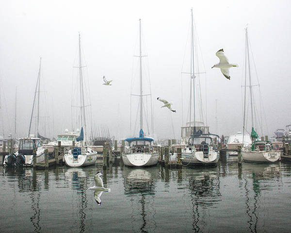 Photograph - Misty Harbor On Lake Macatawa In Holland Michigan With Flying Gulls by Randall Nyhof