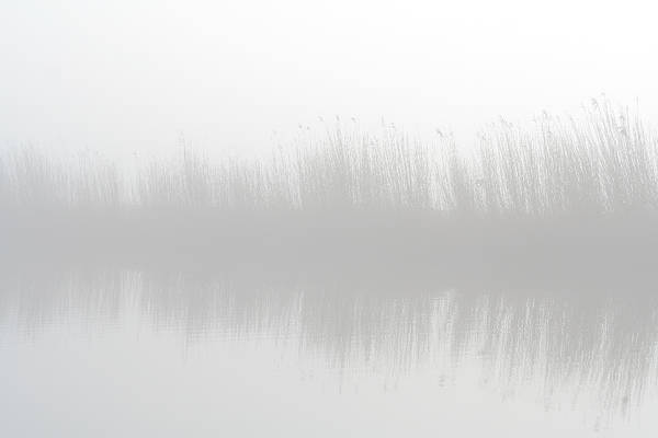 Scenic Photograph - Misty Morning At The Riverside by Marceltb