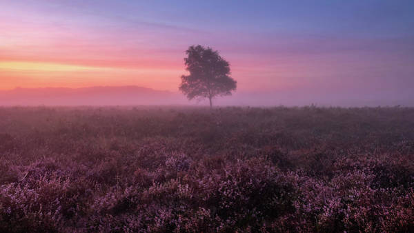 Photograph - Misty Morning by Mario Visser
