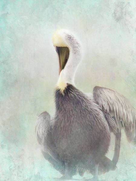 Misty Morning Pelican Art Print