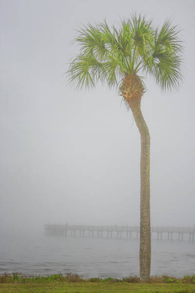 Wall Art - Photograph - Misty Morning - Single Palm by Mitch Spence