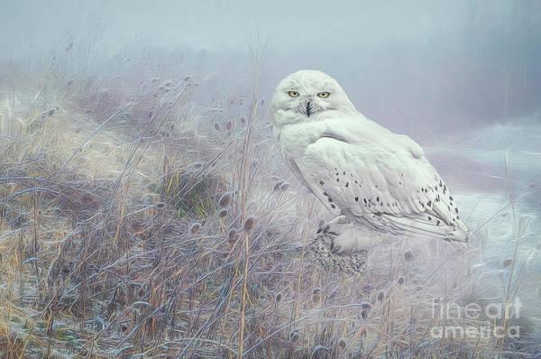 Digital Art - Misty Morning Snowy Owl. by Brian Tarr