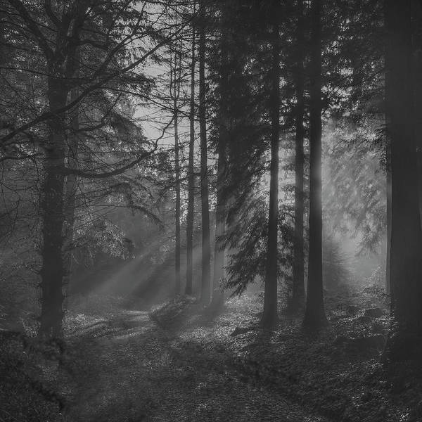 Stourhead Photograph - Misty Morning Sun Rays B/w 2 by Frank Etchells