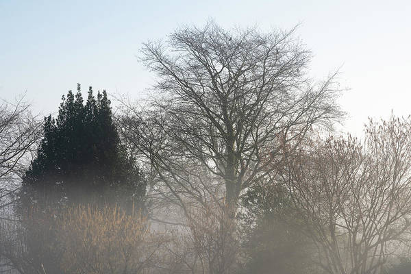 Photograph - Misty Morning Trees by Mark Hunter
