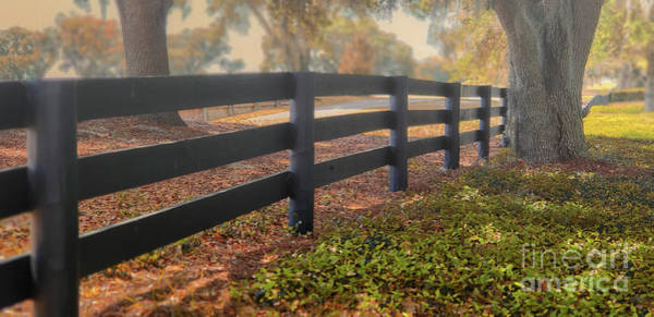 Photograph - Misty Morning Walk by Mary Lou Chmura