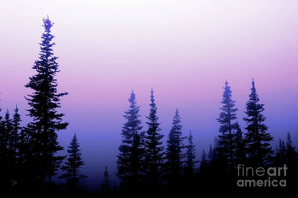 Wall Art - Photograph - Misty Mountain Morning Going To The Sun Road Glacier National Park by John Stephens