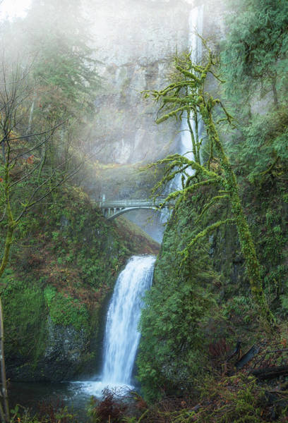 Wall Art - Photograph - Misty Multnomah Falls by Angie Vogel