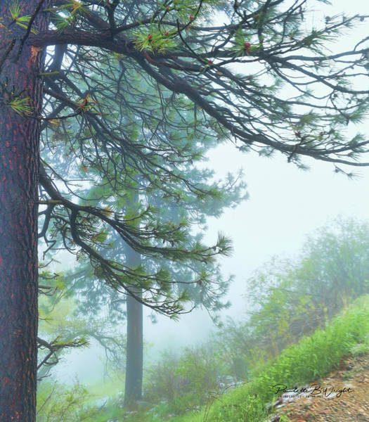 Photograph - Misty Pines by Paulette B Wright