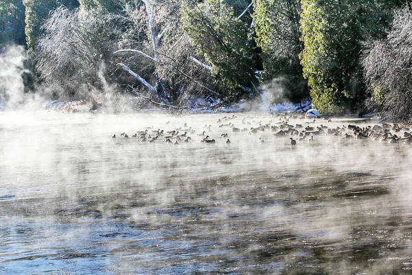 Photograph - Misty River by Nick Mares