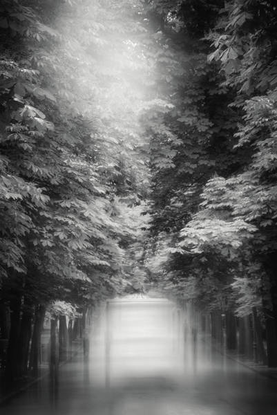 Wall Art - Photograph - Misty Stroll Retiro Park Madrid Black And White by Carol Japp