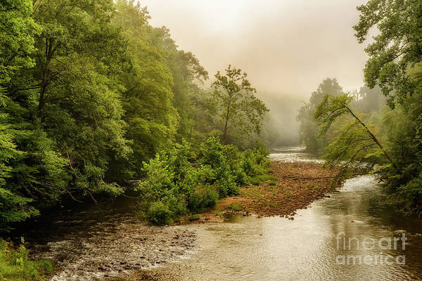 Photograph - Misty Summer Morning Williams River by Thomas R Fletcher