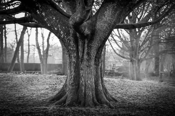 Rawdon Photograph - Misty Tree by Darren Sanderson