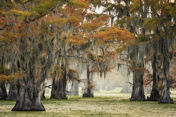 Caddo Lake Wall Art - Photograph - Misty View In The Swamps Of Caddo Lake, Texas by Martin Podt