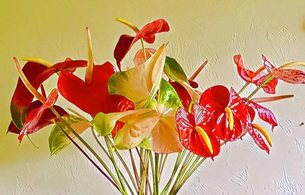 Photograph - Mixed Anthurium Aloha by Joalene Young