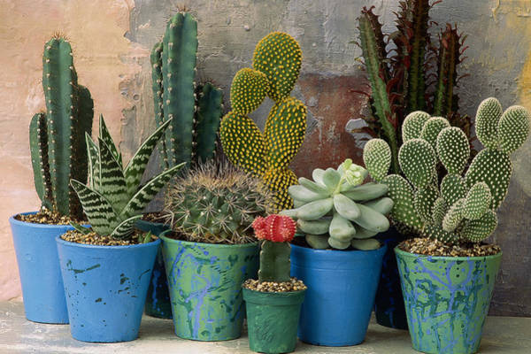 Wall Art - Photograph - Mixed Display Of Cacti And  Succulents by Linda Burgess