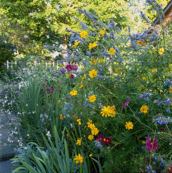 Sulphur Photograph - Mixed Perennial Border Inclusing Cosmos by Richard Felber