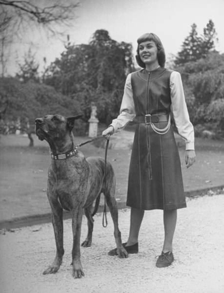 Great Dane Photograph - Model Wearing Belted And Top-stitched Le by Nina Leen