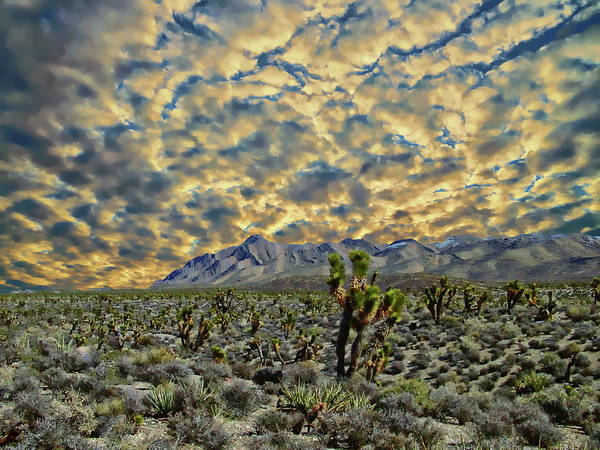 Photograph - Mohave Desert View by Anthony Dezenzio