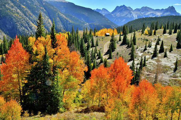 Photograph - Molas Pass Aspens by Ray Mathis