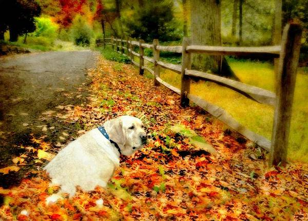 Wall Art - Photograph - Molly Loves Autumn by Diana Angstadt