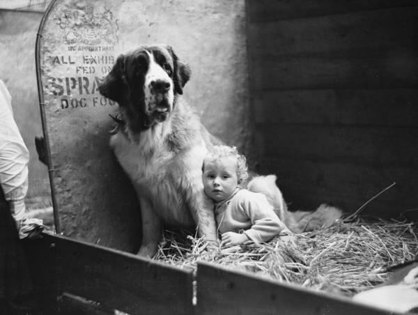 White Dog Photograph - Moltie Mallone by Becker