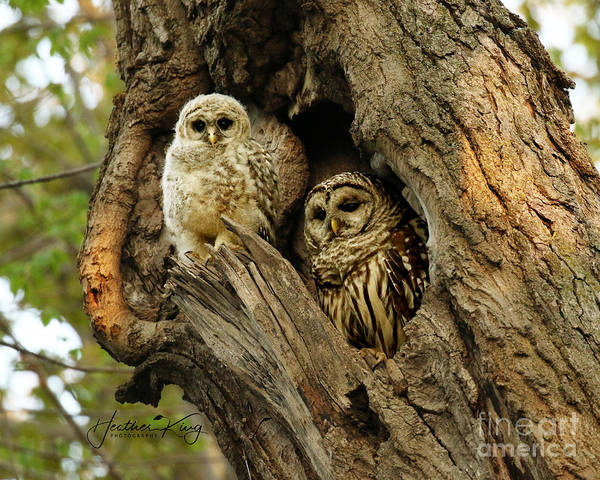 Wall Art - Photograph - Mom And Her Baby Owl by Heather King