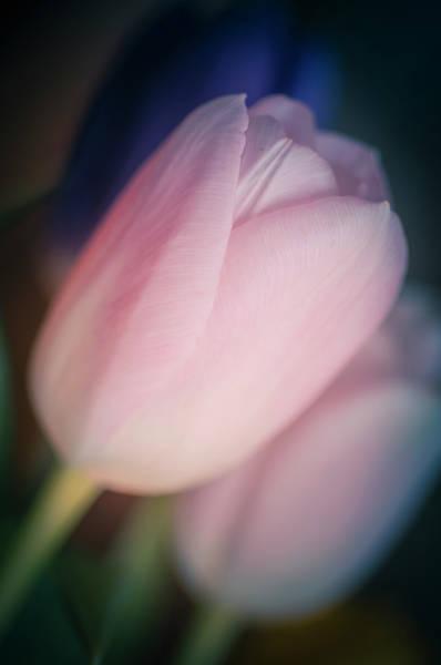 Photograph - Mon Coeur by Christi Kraft
