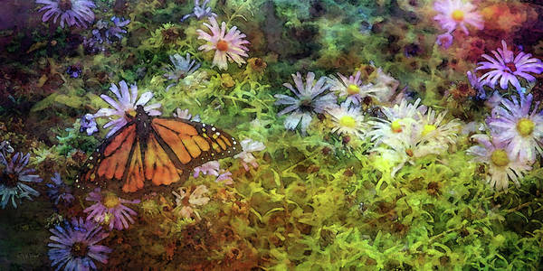 Photograph - Monarch Among The Aster 5626 Idp_maa_2 by Steven Ward