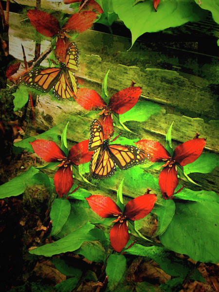 Wall Art - Mixed Media - Monarch Butterflies Enjoy The Delicate Purple Trillium Flowers by Patricia Keller