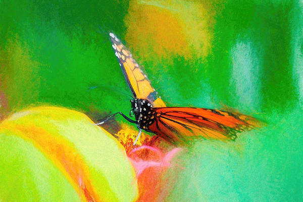 Monarch Butterfly Beautiful Smudge Art Print