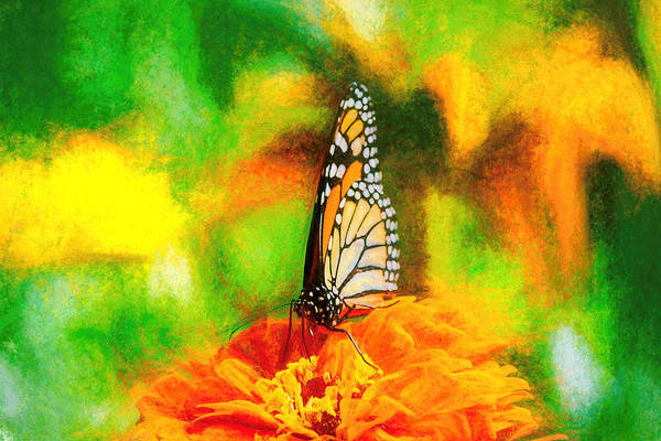 Photograph - Monarch Butterfly Classic Art by Don Northup