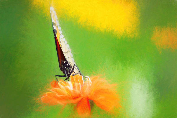 Digital Art - Monarch Butterfly Closed Wings by Don Northup