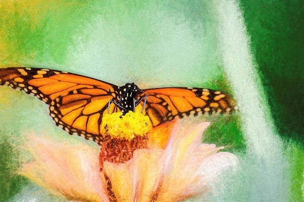 Photograph - Monarch Butterfly Flora by Don Northup