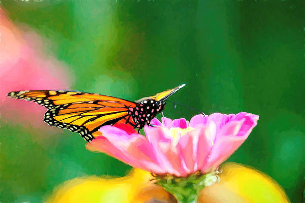 Photograph - Monarch Butterfly Impression by Don Northup