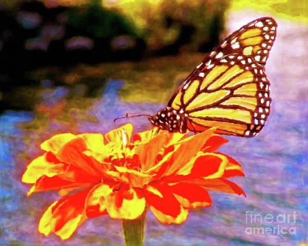 Wall Art - Photograph - Monarch Butterfly by Jerome Stumphauzer