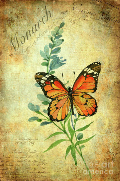 Wall Art - Painting - Monarch Butterfly by John Edwards