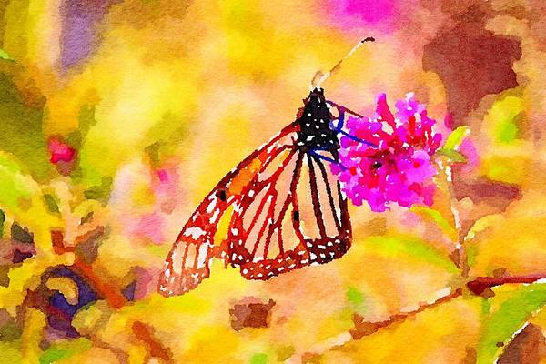 Mixed Media - Monarch Butterfly  by Susan Rydberg