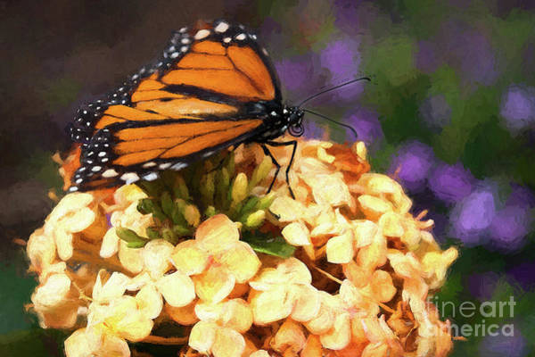 Photograph - Monarch Butterfly by Patti Schulze
