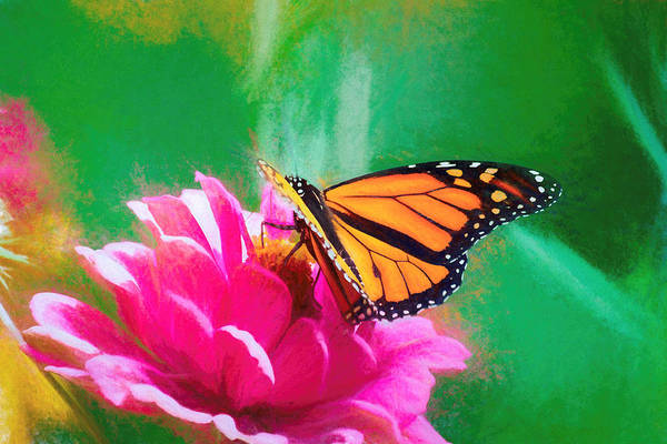 Photograph - Monarch Butterfly Smooth Smudge by Don Northup