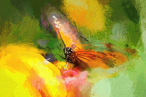 Photograph - Monarch Butterfly Sweet Abstract by Don Northup