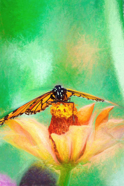 Photograph - Monarch Butterfly Takeoff by Don Northup
