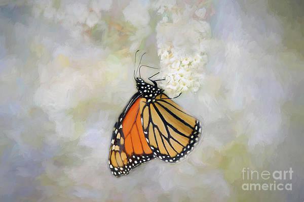 Wall Art - Photograph - Monarch Butterfly by Darren Fisher