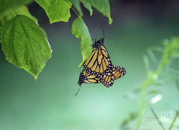 Photograph - Monarch Magic by Karen Adams
