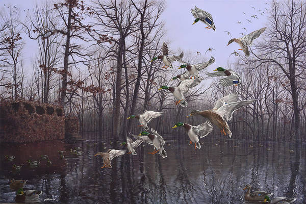 Painting - Monday Morning Mallards by Glenn Pollard