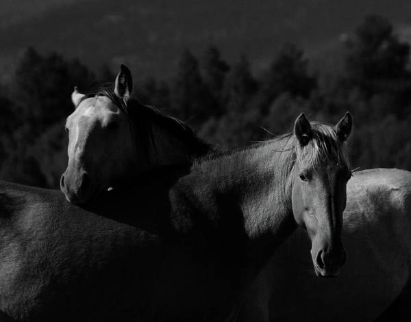 Photograph - Moneros by Catherine Sobredo