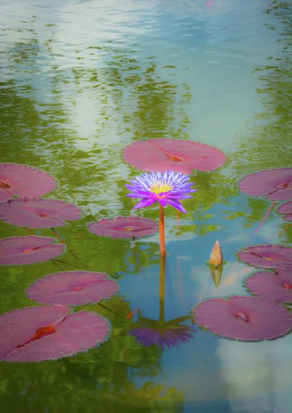 Wall Art - Photograph - Monet Water Lily by Linda Eszenyi