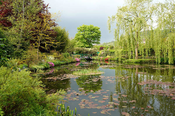 Photograph - Monets Garden 2 by Andrew Fare