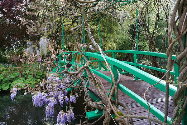 Photograph - Monets Garden 4 by Andrew Fare