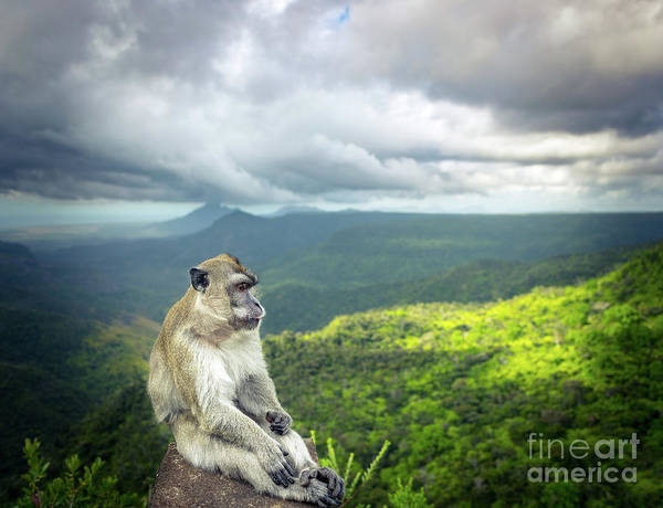 Wall Art - Photograph - Monkey At The Gorges Viewpoint. Mauritius.  by MotHaiBaPhoto Prints